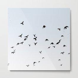 Soaring Birds Metal Print