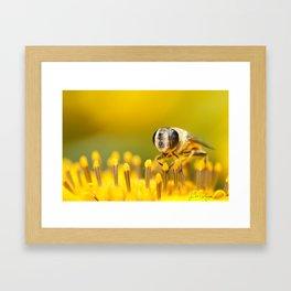 Pollen Feast Framed Art Print