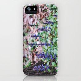 Lavender by Giada Ciotola iPhone Case