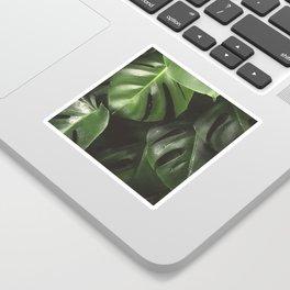 Monstera Leaves Sticker