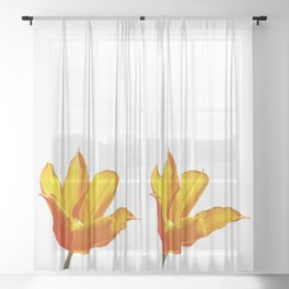 Orange Tulip Sheer Curtain