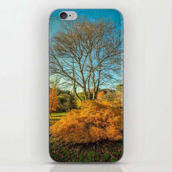 Autumnal Garden iPhone & iPod Skin