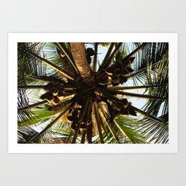 Cocos above Art Print
