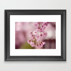 Weeping Willow Flowers Framed Art Print