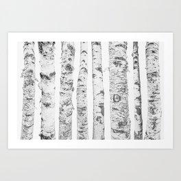 Birch Trees | Forest Landscape Photography Minimalism Art Print