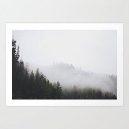 Fog among the pines Art Print