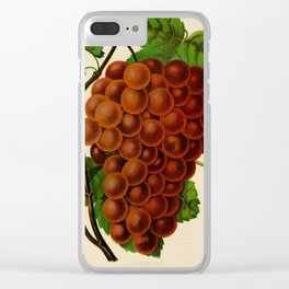 Canadian Horticulturalist 1888-96 - Vergennes Grapes Clear iPhone Case