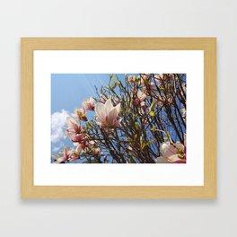Magnolia Tree, Irvington NY Framed Art Print