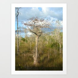 Trees and the grass Art Print