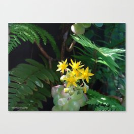 Desert Grotto Blooms Canvas Print
