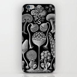 Slime Molds (Mycetozoa) by Ernst Haeckel iPhone Skin
