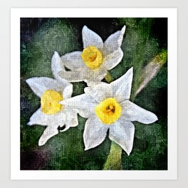 dwarf Daffs in oils Art Print