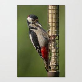 Woodpecker on feeder Canvas Print