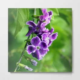 Transformation, Purple Duranta Photography Metal Print