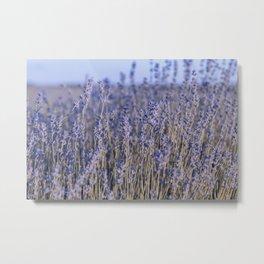 Tender Lavender Metal Print