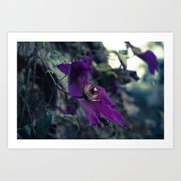 Fading on the Midnight Flower Art Print