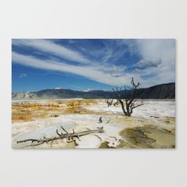Dry trees on Mammoth Terraces, Yellowstone Canvas Print