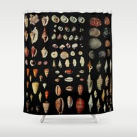 shells Shower Curtains featuring Shells by Good Sense