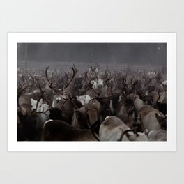 The Herd Art Print