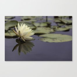 Pale Yellow Lotus Flower and Reflection  Canvas Print