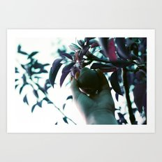 Backyard Pear Art Print