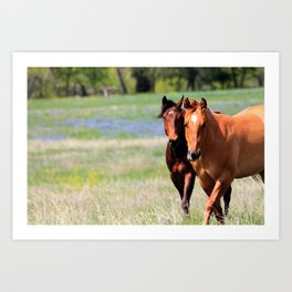 Horses & Bluebonnets II Art Print