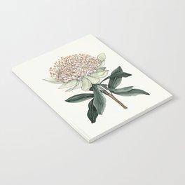 Waratah Botanical Notebook