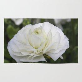 Ranunculus White Rug