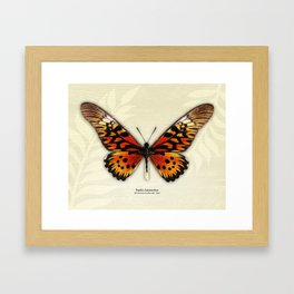 Butterfly14_Papilio Antimachus • male1 Framed Art Print