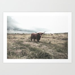 Lonely Bull Art Print