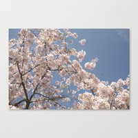 cherry blossoms Canvas Prints featuring  Cherry Blossoms  by cescabear