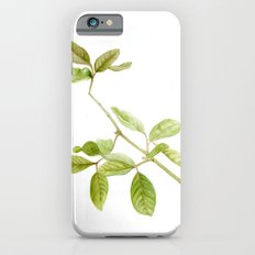 A branch of the tree Psidium fortium Slim Case iPhone 6s