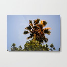 Upward View Metal Print