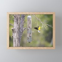 American Goldfinch 2 Framed Mini Art Print