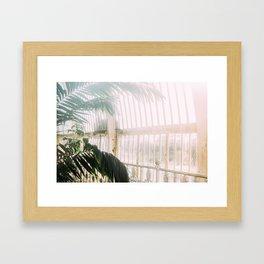 Palm Tree Humid Palm House Framed Art Print