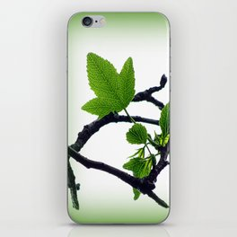 Sweetgum Tree Leaf Sprouts iPhone Skin