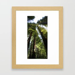 Coast Redwoods Framed Art Print