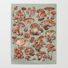 A Series of Mushrooms Poster