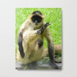 Monkey Don't Care Metal Print