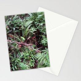Redwood Rainforest Ferns Stationery Cards