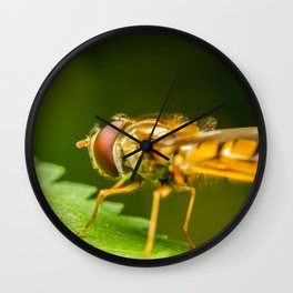 Mimetic Fly On A Leaf In Garden, Fly Insect, Macro Photography, Minimalism, Nature Details, Wall Art Wall Clock
