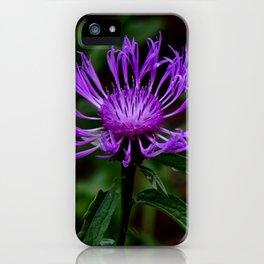 Summer Knapweed iPhone Case