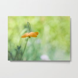 Poppy Abstract Metal Print
