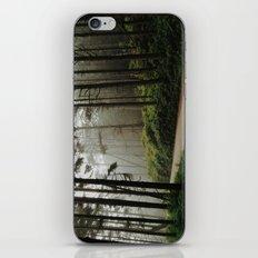 Prairie Creek Road iPhone & iPod Skin