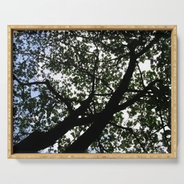 Looking up into the Kapok tree Serving Tray