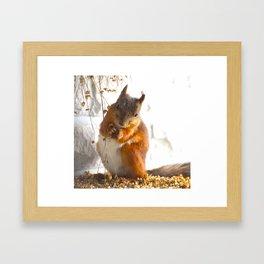 Mommy Squirrel  Framed Art Print