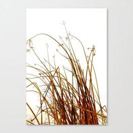 Weedy  Canvas Print