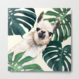 Sneaky Llama with Monstera Metal Print