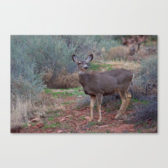 Zion Deer Canvas Print