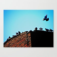 Looking for a Place to Land Canvas Print